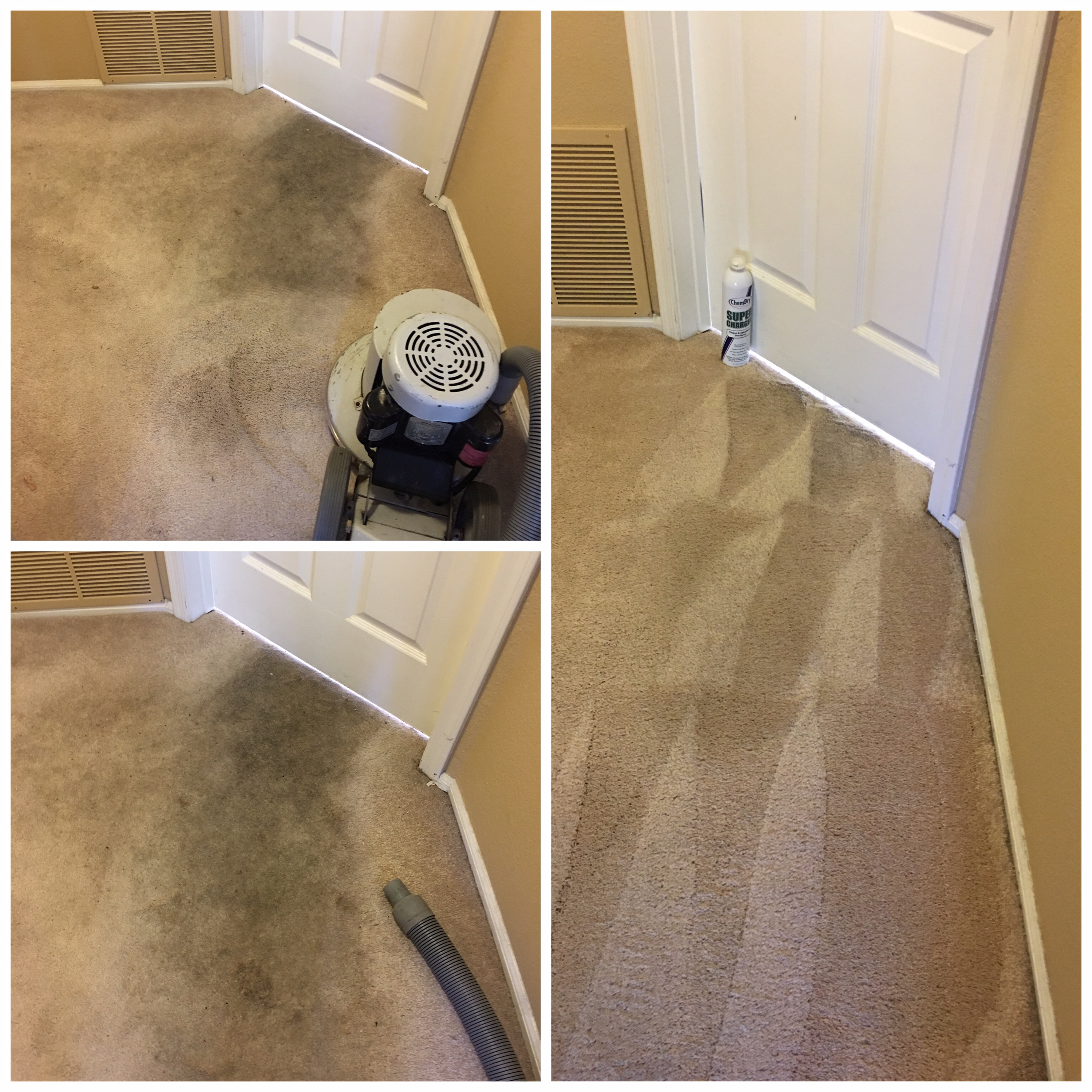 glendale carpet cleaning