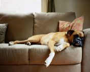 sunrise Chem-Dry couch pet