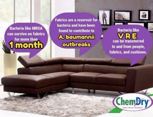 6 Reasons To Have Your Upholstery Cleaning For Allergies