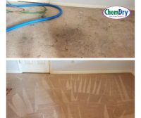 let the professionals clean your carpets