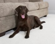 best carpet cleaning for pet urine