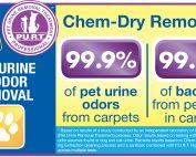 Pet Urine Carpet Cleaning Service