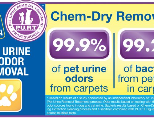 Carpet Cleaning Services to Treat Pet Urine